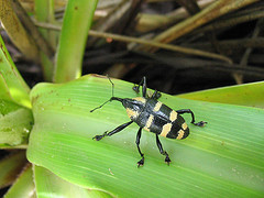 Dominica Ecotourism: Insects Near the Boiling Lake