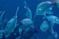 Atlantis Resort Bahamas: Aquarium